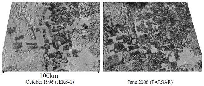 Fig. 1 Amazon deforestation in 10 years as determined using L-band SAR data. Left: Image of Amazon forest area acquired by JERS-1/SAR in 1996. Right: Image of same area acquired by ALOS/PALSAR in 2006.