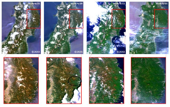 「しきさい」による東北地方のカラー合成画像(上図)。SGLIの赤(VN08: 673.5nm)・緑(VN06: 565nm)・青(VN03: 443nm)のチャンネルの観測データをそれぞれR・G・Bに割り当てた。下図は北上山地付近の拡大図で、季節が進むにつれて高山域でも徐々に展葉が進んでいく様子が分かる。